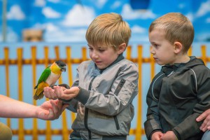 Pleasurewood Hills - Parrot Show - Richard Jarmy Photography - Wedding commercial event Photographer